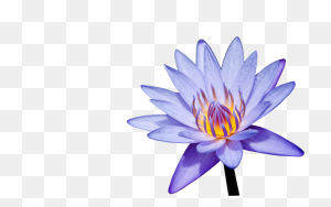Albums Frames,love Frames,marriage Frames,wedding - Water Lily PNG
