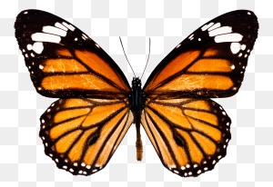 Butterflies Butterfly - Monarch Butterfly PNG