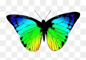 Butterflies Butterfly Clipart - Transparent Butterfly Clipart