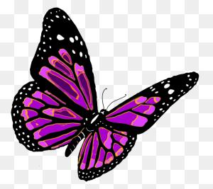Butterflies Png Hd Free Download Transparent Butterflies Hd - Butterfly PNG