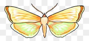 Monarch Butterfly Brush Footed Butterflies Pieridae Birdwing Free - Orange Butterfly Clipart