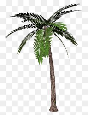 Palm Tree Png Palm, Palm - Palm Tree Leaf PNG
