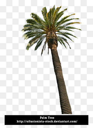 Palm Trees Transparent Background, Palm Tree Png Images, Download - Palm Tree Leaf PNG