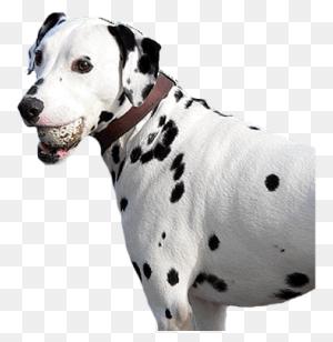Pet Foods, Pet Treats, Pet Care, Pet Nutrition Apetite Foods - Dog Treat PNG