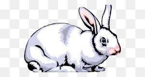Rabbit Clipart Images Rabbit Clipart Images Cute Bunny Cartoon Png - Cute Rabbit Clipart