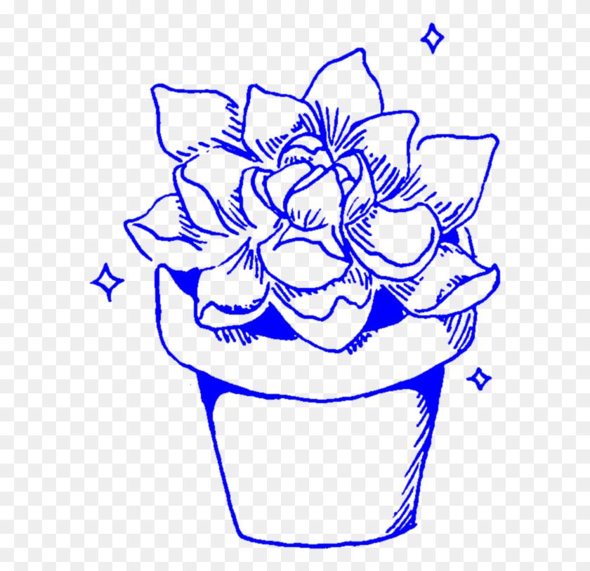 Aesthetic Succulent Succulents Cactus Cacti Plant Plant - Succulent PNG