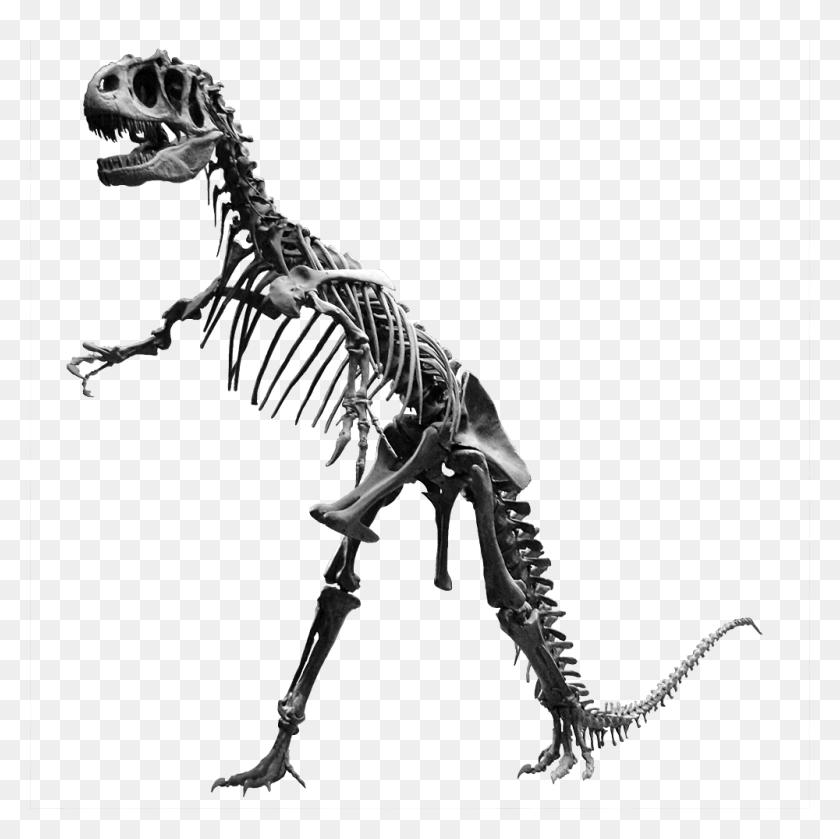 Allosaurus Jardin Des Plantes - Skeleton PNG