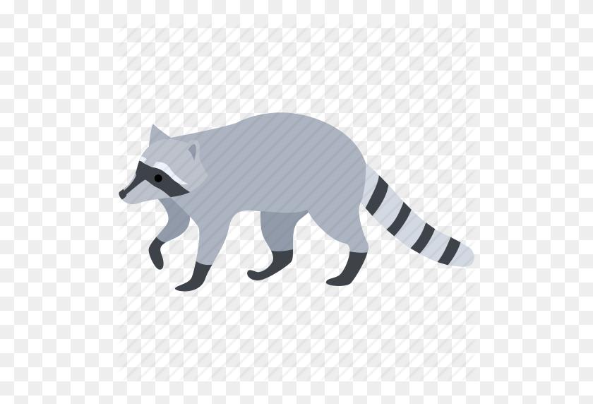 American, Animal, Fur, Pest, Raccoon, Racoon, Thief Icon - Racoon PNG