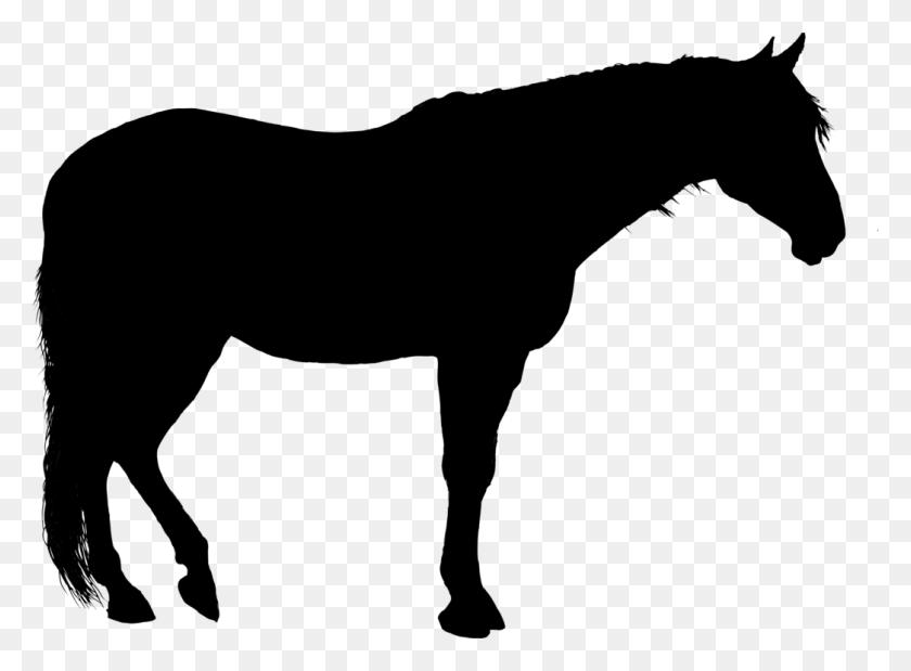 American Quarter Horse American Paint Horse Stallion Silhouette - Quarter Horse Clipart