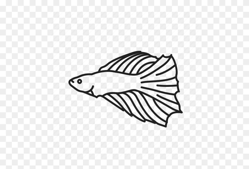 Aquarium Fish, Betta Fish, Betta Splendens, Fish, Siamese Fighting - Betta Fish PNG