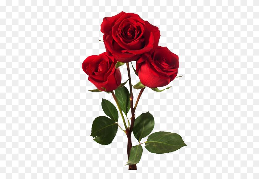 486x520 Arreglos Florales Para Toda En Coyoacan Con - Rosas Rojas PNG