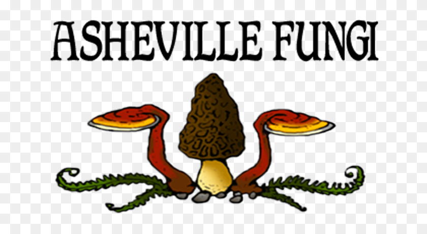 708x400 Asheville Fungi, For All Your Mushroom Cultivation And Growing Needs - Morel Mushroom Clipart