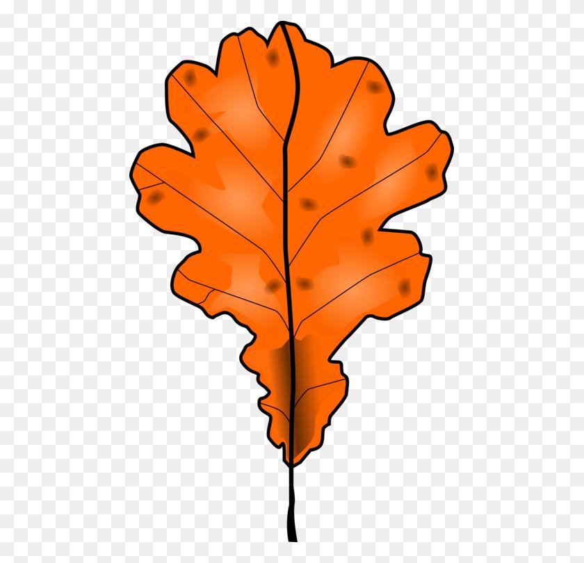 Autumn Leaf Color Maple Leaf Orange Green - Orange Color Clipart