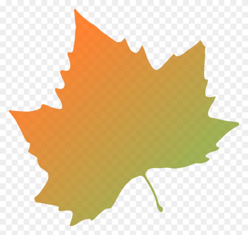 Autumn Leaf Color Tree Orange - Orange Color Clipart