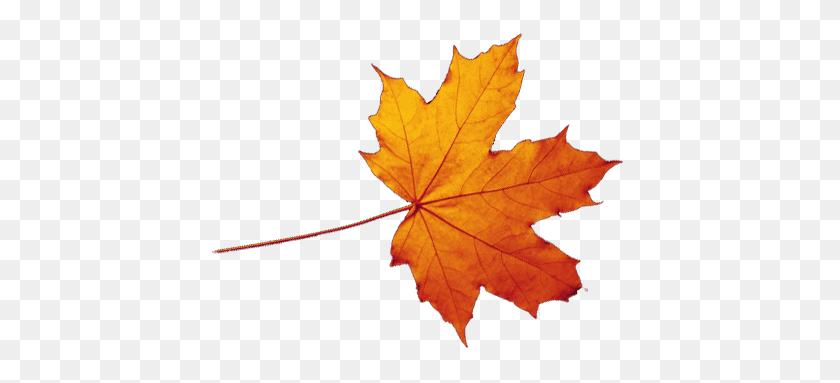 Autumn Png Transparent Autumn Images - Autumn PNG
