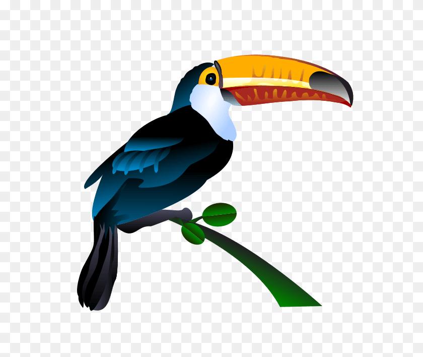 566x648 Aviary Birds Cliparts - Bird Of Paradise Clipart