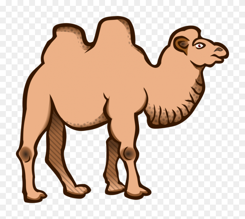 Camel clipart free download clipartfest 2 - WikiClipArt