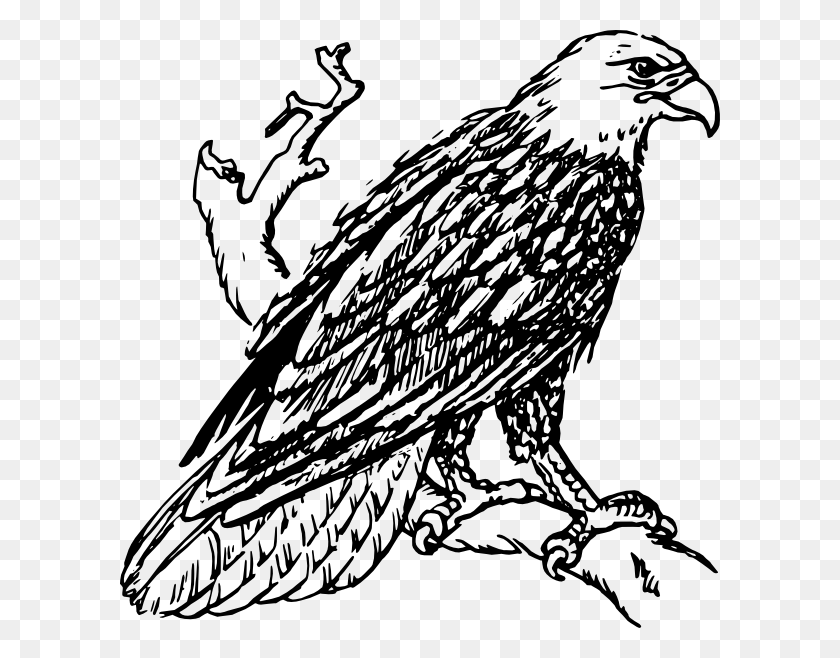 Bald Eagle Png Clip Arts For Web - Soaring Eagle Clip Art