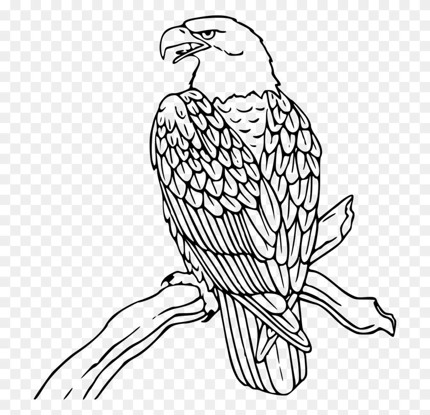 Bald Eagle White Tailed Eagle Philippine Eagle Golden Eagle Free - Soaring Eagle Clip Art