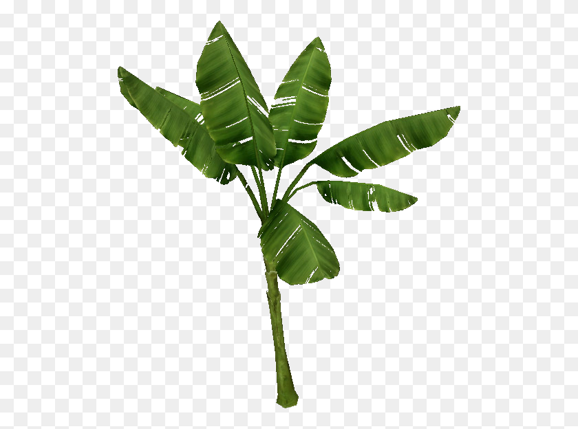 Banana Tree Images Clip Art