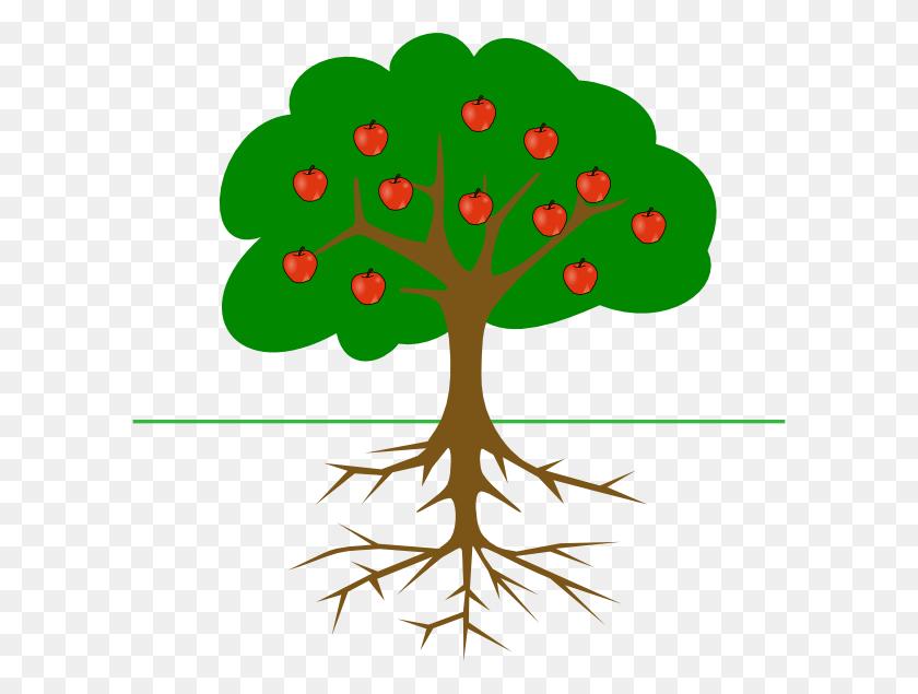Bare Apple Tree Png Transparent Bare Apple Tree Images - Oak Tree PNG
