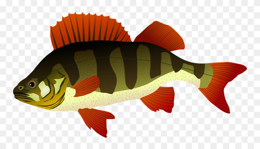 Bass Fish Clipart Fishing Vintage Clip Art On Graphics Fairy - Dr Seuss Fish Clipart