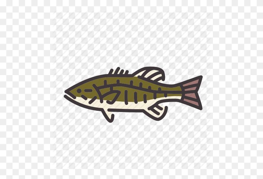 Bass, Fish, Fishing, Freshwater Gamefish, Smallmouth Bass, Sunfish - Bass Fish PNG