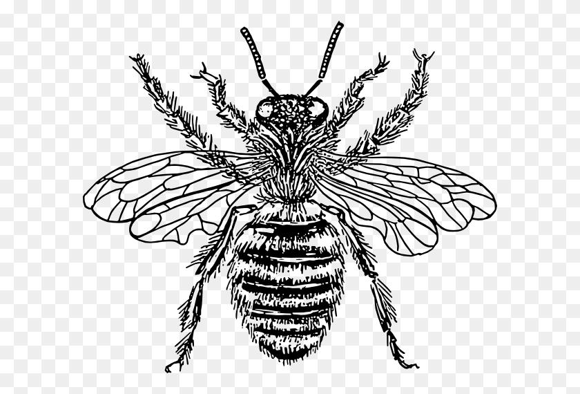 Bee Queen Clip Art Free Vector - Queen Bee Clipart
