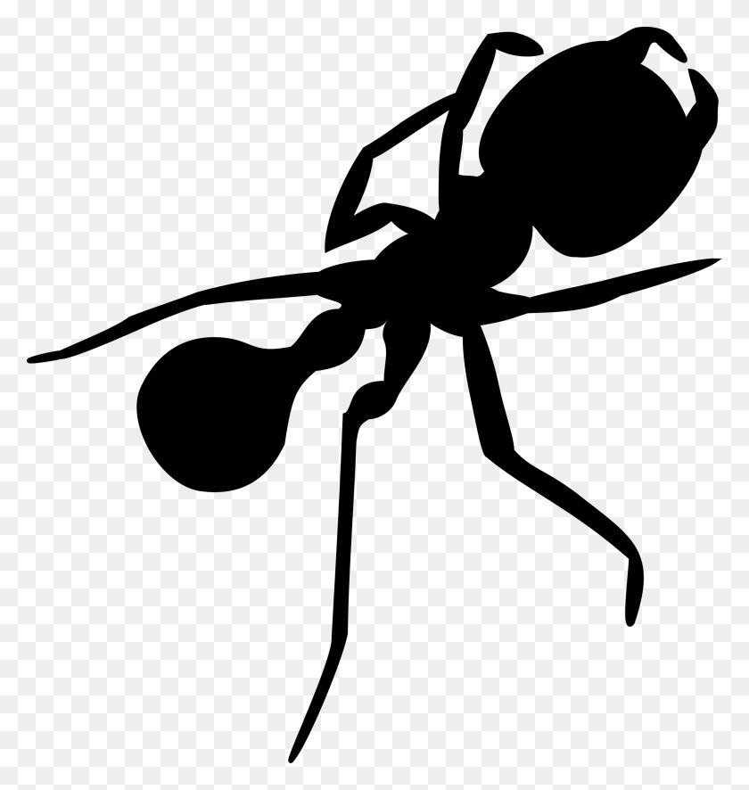 Beetle Clipart Clip Art, Beetle Clip Art Transparent Free - Ant Clipart PNG