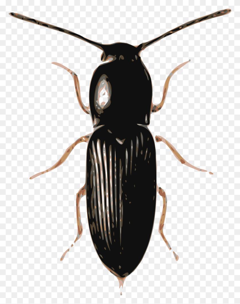 Beetle Png Transparent Beetle Images - Beetle PNG