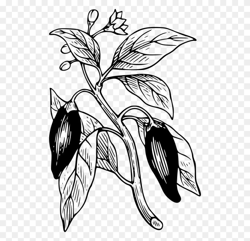 Bell Pepper Chili Pepper Chili Con Carne Plants Black Pepper Free - Chili Clipart Black And White