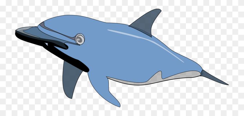 Beluga Whale Cetacea Blue Whale Sperm Whale Killer Whale Free - Beluga Whale Clipart