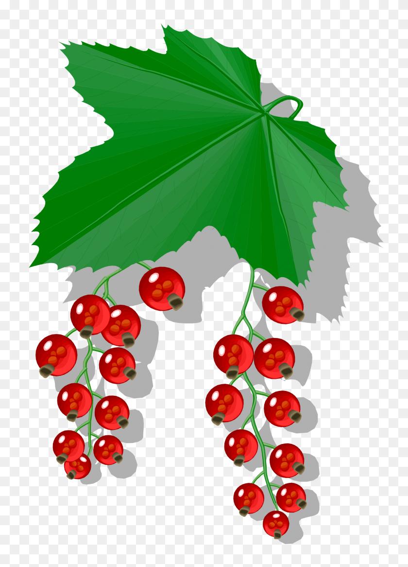 Berries - Berries PNG