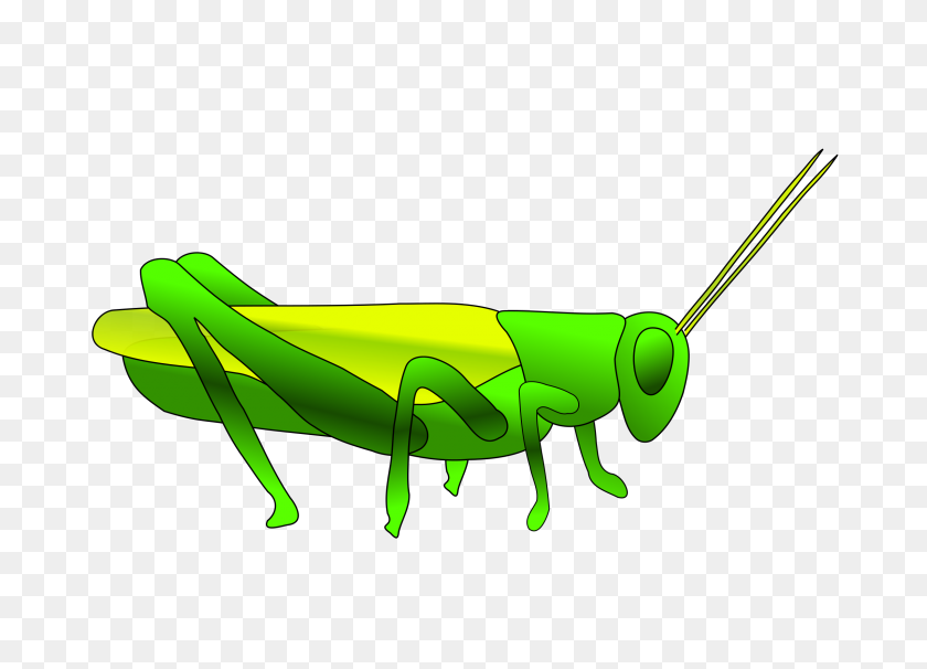 Best Grasshopper Clipart - Patience Clipart
