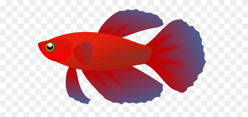 Beta Fish Clipart - No Fighting Clipart