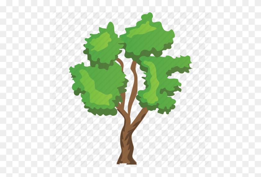 Betula Nigra, Birch Tree, Ecology, Nature, River Birch Tree Icon - Birch Tree PNG