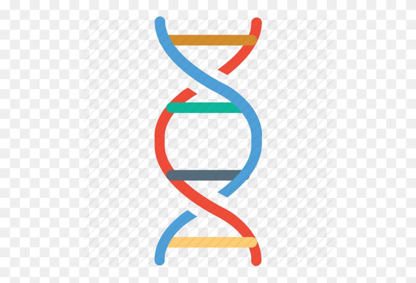Dna clipart biology, Dna biology Transparent FREE for download on  WebStockReview 2020