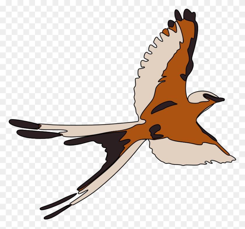 Bird Clipart Kestrel - Bird Watching Clipart