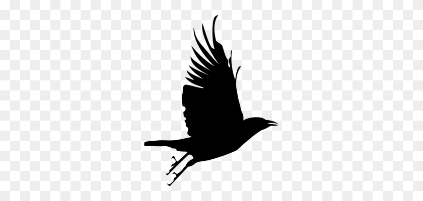 Bird Crow Beak Common Raven Feather - Mockingbird Clipart
