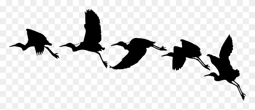 Bird Drawing Silhouette Cartoon Computer Icons - Birds Silhouette PNG