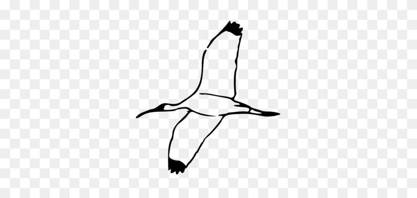 Bird Ibis Parrot Cartoon Drawing - Parrot Clipart Black And White