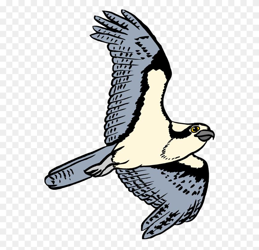 Bird Of Prey Clipart Osprey - Bird Nest Clipart