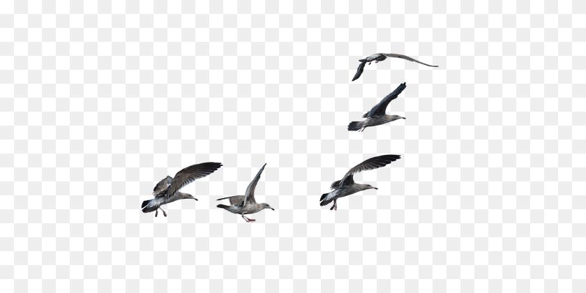 Bird Png - Flock Of Birds PNG – Stunning free transparent png