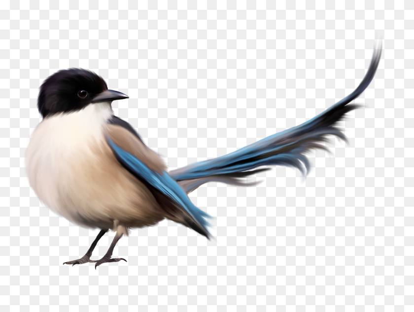 1395x1027 Bird With Blue Tail Png Clipart - Tail Clipart