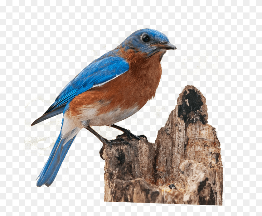 Flying Birds Png Images Png Image - Birds Flying PNG – Stunning free
