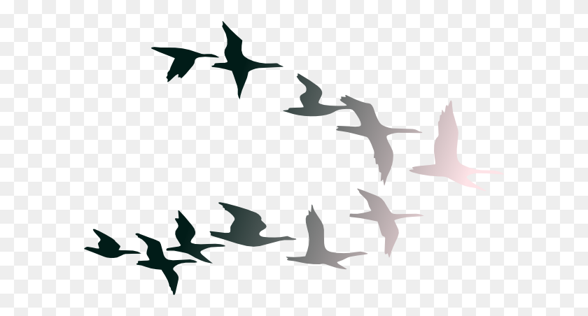 Birds In Flight Png Clip Arts For Web - Birds Silhouette PNG