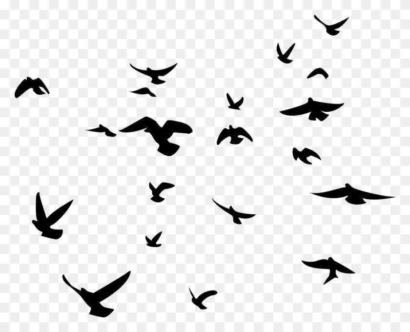 Birds Png Transparent Picture Flock Of Birds - Flock Of Birds PNG