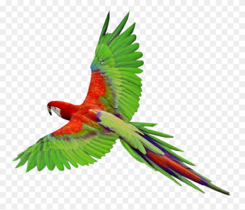 Birds Png Parrot, Birds - Birds Flying PNG