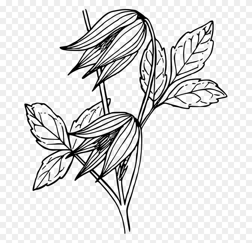 Black And White Drawing Leather Flower Vine Computer Icons Free Vines Clipart Black And White Stunning Free Transparent Png Clipart Images Free Download