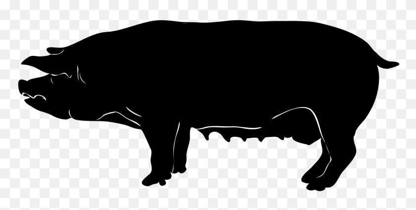 Black And White Pig Clipart No Background Collection - Pig Clipart